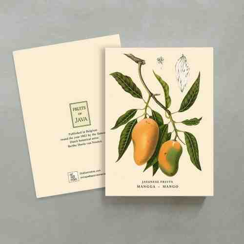 Old East Indies Ring Book Mango - Mangga
