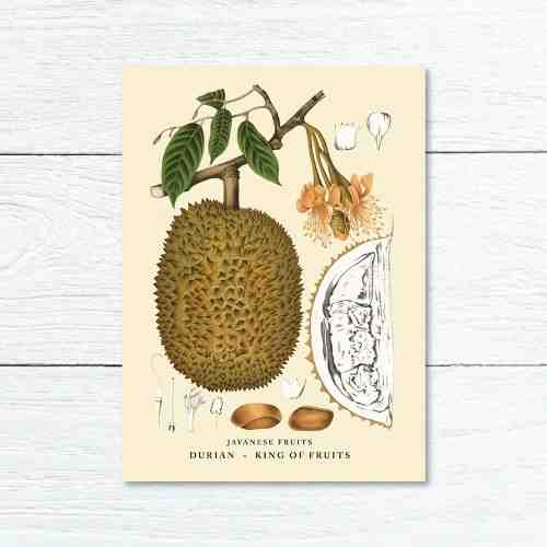 Old East Indies Greeting Card King Fruits - Durian