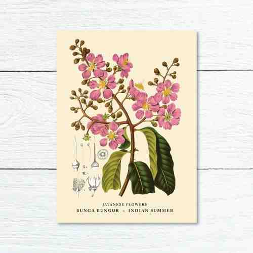 Old East Indies Greeting Card Indian Summer - Bunga Bungur