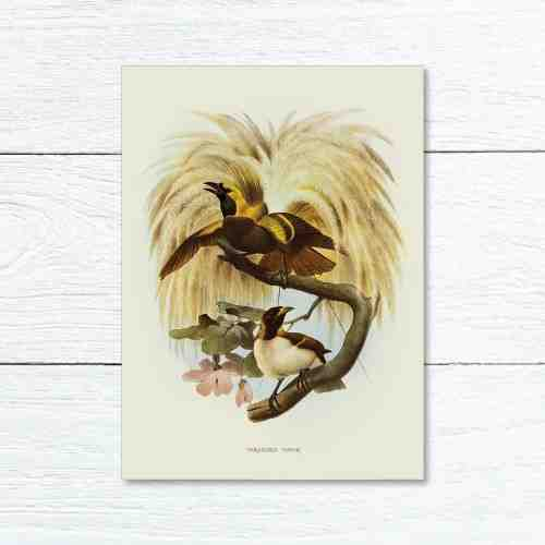 Old East Indies Greeting Card Lesser Bird of Paradise Year 1873