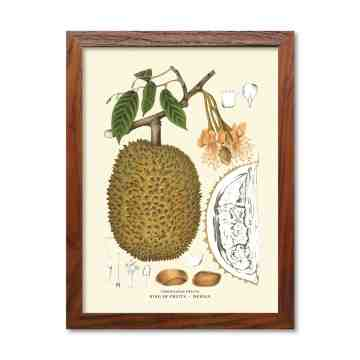 Old East Indies Frame Javanese Fruits - Durian / Durian Fruits