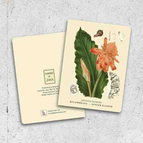 Old East Indies Thin Book Ginger Flower - Kecombrang