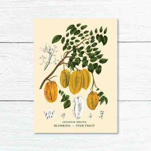 Old East Indies Greeting Card Star Fruit - Blimbling