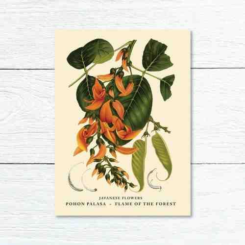 Old East Indies Greeting Card Flame of the Forest - Pohon Palasa