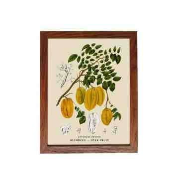 Old East Indies Frame Javanese Fruits - Blimbing / Star Fruit