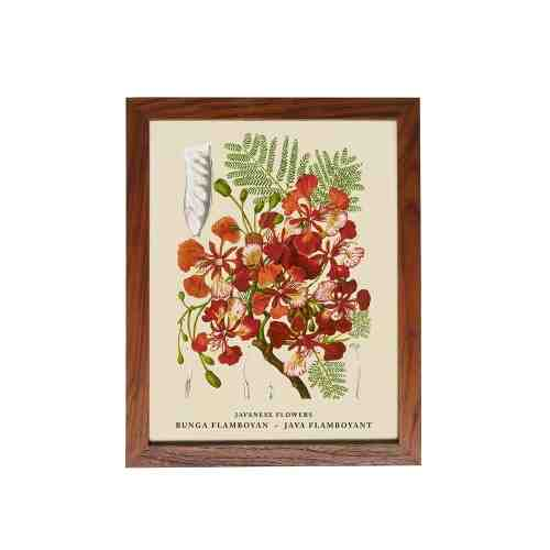 Old East Indies Frame Javanese Flowers - Bunga Flamboyan / Java Flamboyant
