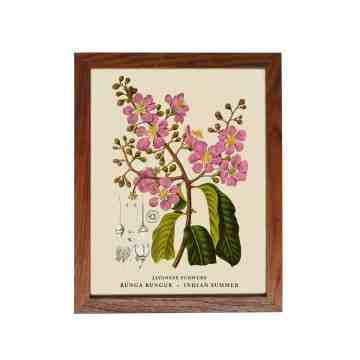 Old East Indies Frame Javanese Flowers - Bunga Bungur / Indian Summer